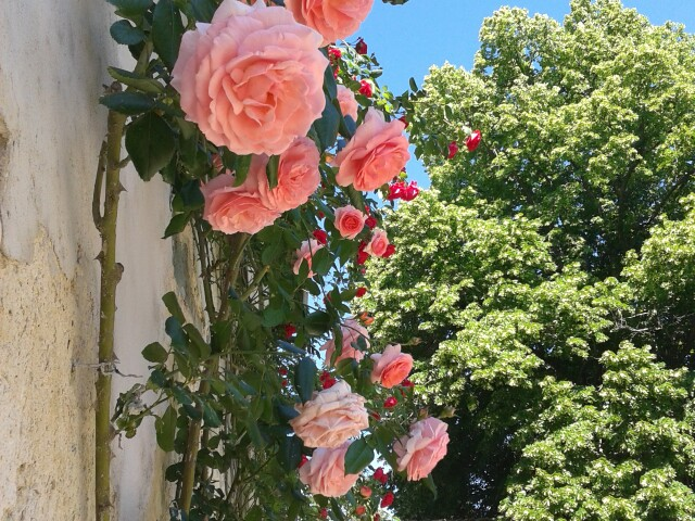 Le rose e altri fiori di Spante