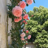 THE ROSES AND OTHER FLOWERS OF SPANTE