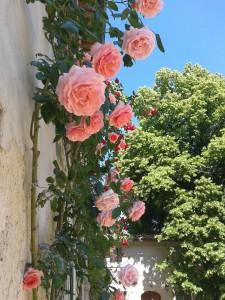Rose della facciata